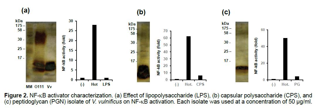 ejbio-activator-characterization