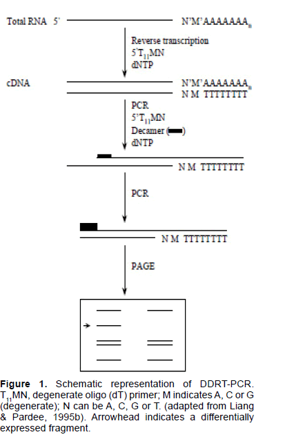 electronic-biology-differentially-expressed-fragment