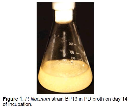 ejbio-lilacinum-strain
